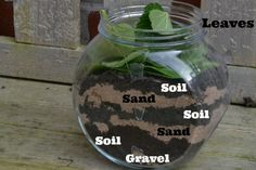 Easy instructions on how to make your own wormery, all you need is an old jar, sand, gravel, soil, leaves and some worms.