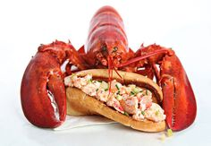 Lobster Rolls and Lobster Lessons