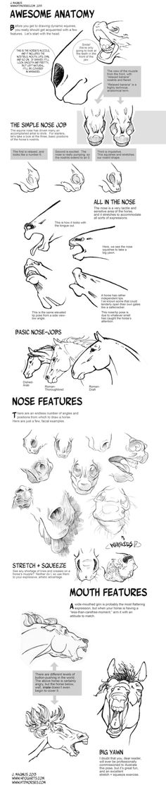 Horse Anatomy Part I by sketcherjak.deviantart.com on @deviantART by lily22