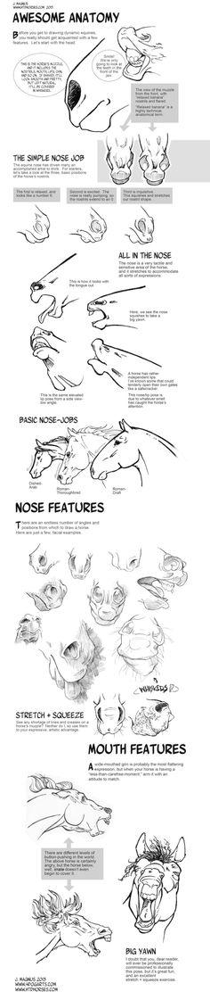 Horse Anatomy Part I by sketcherjak.deviantart.com on @deviantART by lily22