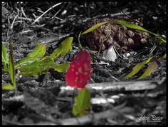 Hojas silvestres y Piña B&N-Color M6110007