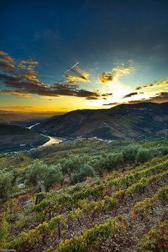 Douro Valley, Portugal via Antiga Portugueza antigaportugueza.pt
