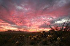 Come visit all the beauty of Arizona. #Arizona