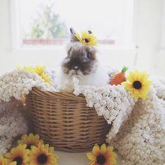 hoppy easter everybunny! @dustythedustbunny  #betweendreams #bunny #lionhead #happyeaster #easterbunny #mascot #betweendreams | instagram: @betweendreamsdesigns |
