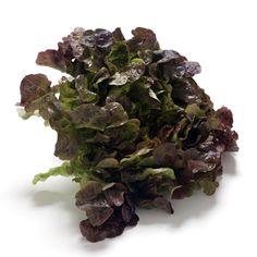 Eichblattsalat : Warenkunde & Zutaten (A -Z) | Küchengötter