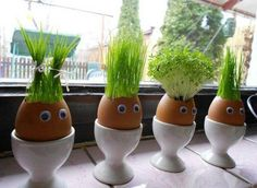 DIY eggheads! Just put a coton ball and seeds at the bottom. Cool :)