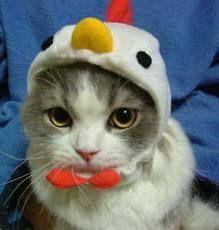 猫画像 - Google 検索
