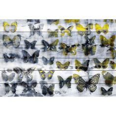 Parvez Taj Yellow Wings Art Print on White Pine Wood, Size: 45 inch x 30 inch, Multicolor