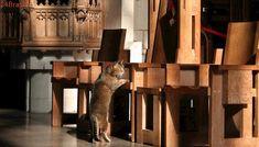 Ela atrai fiéis   Gata vira-lata rende R$ 44 mil para catedral londrina