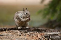 Cute Squirrels | cute-squirrel