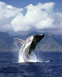 whale watching!