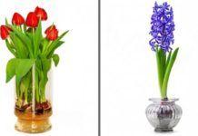 19 virág és zöldség, amit egyetlen pohár vízben is nevelhetsz Garden Plants, Glass Vase, Home Decor, Medicinal Plants, Bouquets, Gardens, Plant, Decoration Home, Room Decor