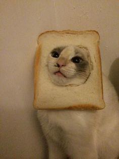 bread face cats