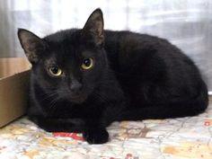 *** SAFE 02/25/17 *** What's Rubin's favorite sandwich? A Reuben, of course! Meet this kitty @MACC!