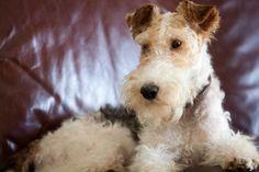 Baxter-what a handsome boy.