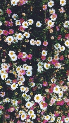 phone wallpaper sunflower phonewallpaper flowers phone wall paper sunflower phone wallpapers to make flowers grow on mobile phones Beautiful flower mobile phone wallpaper Frühling Wallpaper, Flower Phone Wallpaper, Spring Wallpaper, Aesthetic Iphone Wallpaper, Nature Wallpaper, Aesthetic Wallpapers, Hd Flowers, Beautiful Flowers Wallpapers, Pretty Wallpapers