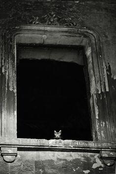 little cat - Miezetatze-Bilder - Gatos Cute Kittens, Cats And Kittens, I Love Cats, Big Cats, Cool Cats, Crazy Cat Lady, Crazy Cats, Animals And Pets, Cute Animals