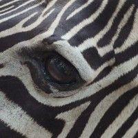 Οι παρακάτω είναι ορισμένες από τις πιο εντυπωσιακές φωτογραφίες ζώων από όλον τον κόσμο, που απεικονίζουν το ζωικό βασίλειο σε όλο του το μεγαλείο. Παιχνίδια, επιβίωση και τρυφερές στιγμές, οι εικόνες αυτές παρουσιάζουν την καθημερινότητα των ζώων, όπως δεν την έχουμε ξαναδεί ποτέ. Δείτε ορισμένες εκπληκτικές λήψεις, από τις πιο έντονες στιγμές ζώων από όλον τον κόσμο.
