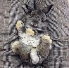 This bun who will only nap in decors that match his luscious gray coat.