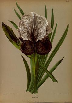 Album van Eeden : - Biodiversity Heritage Library / Missouri Botanical Gardens Rare Book Collection