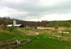Rufflands Farm - New York