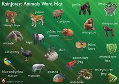 Teacher's Pet - Rainforest Words (on leaves) - FREE Classroom Display Resource - EYFS, KS1, KS2, rain, forest, deforestation, trees, monkeys, snakes, parrots, sustainability