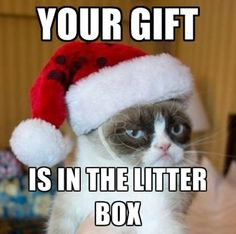 Image result for cat christmas humor gift