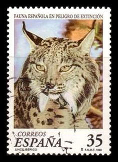 Spain 1998 - Iberian Lynx (Lynx pardinus) is an endangered species of felid living mainly in the Iberian Peninsula in southwestern Europe.