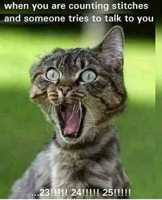 Memes have taken over the world. Browse our collection of happy birthday memes with funny cats, dogs and cute animals. Cat Quotes, Funny Quotes, Funny Memes, Hilarious, Videos Funny, Knitting Humor, Crochet Humor, Funny Crochet, Funny Cats