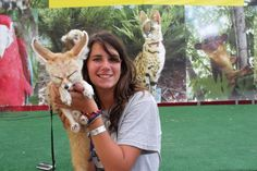 Fennec Fox at the Wildlife Exhibit at the Cass County Fair