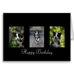 Border Collie happy birthday Greeting Card.  A wonderful collage of border collies that will delight any border collie lover.  Click card and delete or change text, alternatively leave as is