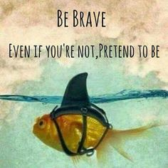 Be brave goldfish