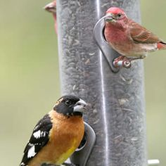 How to Entice Birds to Your Backyard