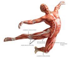 Localización del músculo recto interno o grácil, fascia lata, ligamento lateral interno de rodilla y ligamento lateral externo de rodilla.