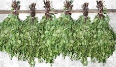 Set from 4 BR for Sauna Brooms of Juicy Shoots of Birch Harvest Season in 2015 | eBay