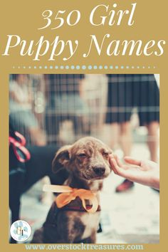 Hello pet lovers, dog lovers, dog owners and puppy owners. Are you a new pet owner? Did you just get a cute puppy or cute dog? Congrats! I created a list of unique dog names girl list. You are welcome to have my wonderful list of dog names girl unique list. This list is also for dog girl names for puppies. They are cut and unique puppy names female dogs.#puppy #puppynames #names #dognames #dog #doglove Puppies Names Female, Puppy Names, Pet Memorial Gifts, Cat Memorial, Unique Cat Names, Pet Loss Grief, Famous Dogs, Dog List, Pet Lovers