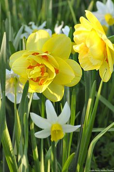Best Indoor Garden Ideas for 2020 - Modern Lavender Garden, Purple Garden, Colorful Garden, Spring Plants, Spring Bulbs, Spring Flowers, Tahiti, Bulb Photography, Narcisse