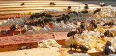 How Honey Bees Make Honey | greensideup.ie