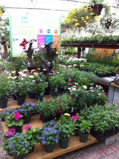 Centre jardin | LeVert Paysage | Botanix | Laurentides | Mont-Tremblant | Flowers | garden center