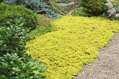 Top 10 Colorful Ground Covers. birdsandblooms.com