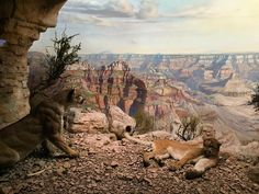 « Diorama at the American Museum of Natural History, New York. »