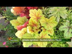 (25) Rośliny ozdobne aż do mrozów - Ogród Bez Tajemnic - YouTube