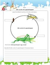 color the life cycle grasshopper beautiful coloring and circles. Black Bedroom Furniture Sets. Home Design Ideas