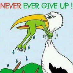 Never Give Up Motivational Quotes. Positive Quotes, Motivational Quotes, Inspirational Quotes, Motivational Pictures, Reality Quotes, Life Quotes, Frog Quotes, Funny Jokes, Hilarious