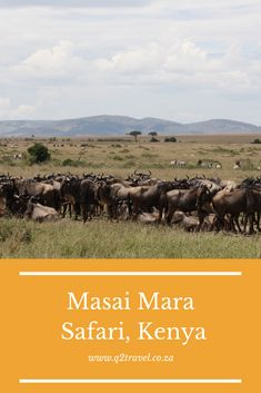 What makes a Masai Mara safari such a great travel experience? Find out why you need to need to visit the Masai Mara on your next safari in Africa. African Safari, Kenya, Bucket, Blog, Travel, Viajes, Blogging, Destinations, Traveling