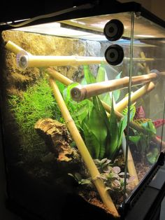 Is hot glue safe to use in a terrarium? Reptile Decor, Reptile Room, Reptile Cage, Bearded Dragon Enclosure, Bearded Dragon Cage, Reptiles, Lizards, Amphibians, Snakes
