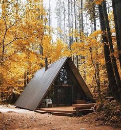 Forest hide away