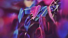 Wallpaper: http://desktoppapers.co/mk01-fall-leaf-flower-bokeh-nature/ via http://DesktopPapers.co : mk01-fall-leaf-flower-bokeh-nature