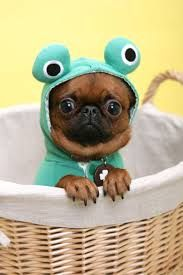 Can't I be a frog too?