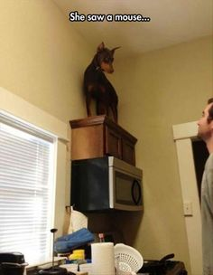 21 Funny Animal Pictures